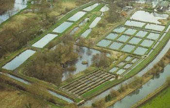 The history of berkshire trout farm for Dunn fish farm
